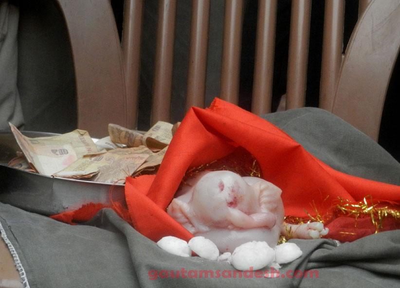 सूअर का अविकसित बच्चा।