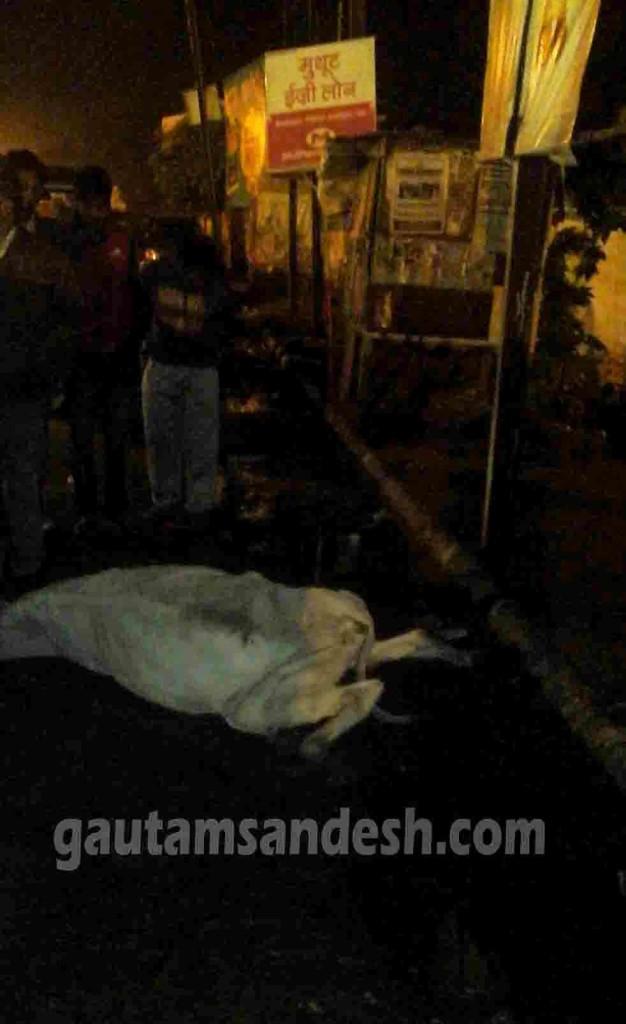 बदायूं क्लब के सामने सड़क पर पड़ा गाय का शव।